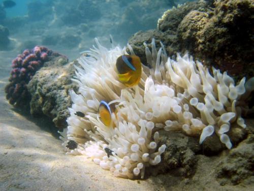 Impressionen Unterwassserwelt Rotes Meer