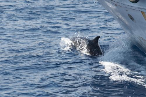 frei lebende Delfine
