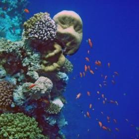 Die ersten Unterwasserfotos