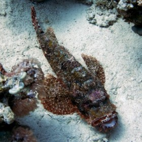 Rotes Meer Unterwasserfotos