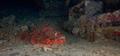 Tauchsafari Mai 2014 nördliches Rotes Meer