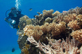 Red Sea - Juli 2014